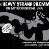 O dilema da fita pesada da mitocôndria