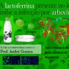 Proteína de leite bovino como alvo molecular no combate à infecção de arboviroses