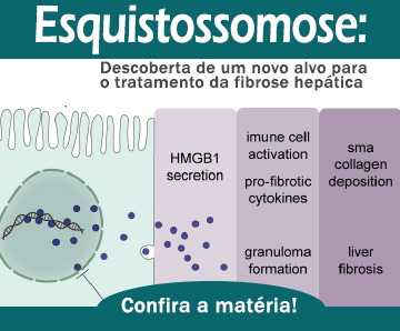 Esquistossomose: