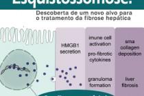 Esquistossomose: Descoberta de um novo alvo para o tratamento da fibrose hepática